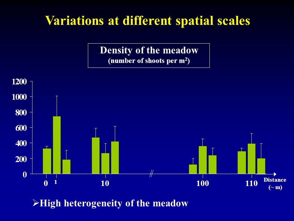 Variations at different spatial scales Density of the meadow (number of shoots per m 2 ) 0 1 10 100110 Distance (~ m)  High heterogeneity of the mead