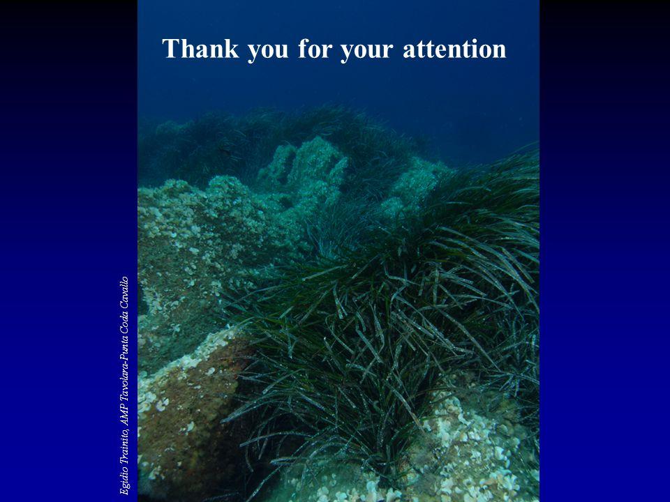 Thank you for your attention Egidio Trainito, AMP Tavolara-Punta Coda Cavallo