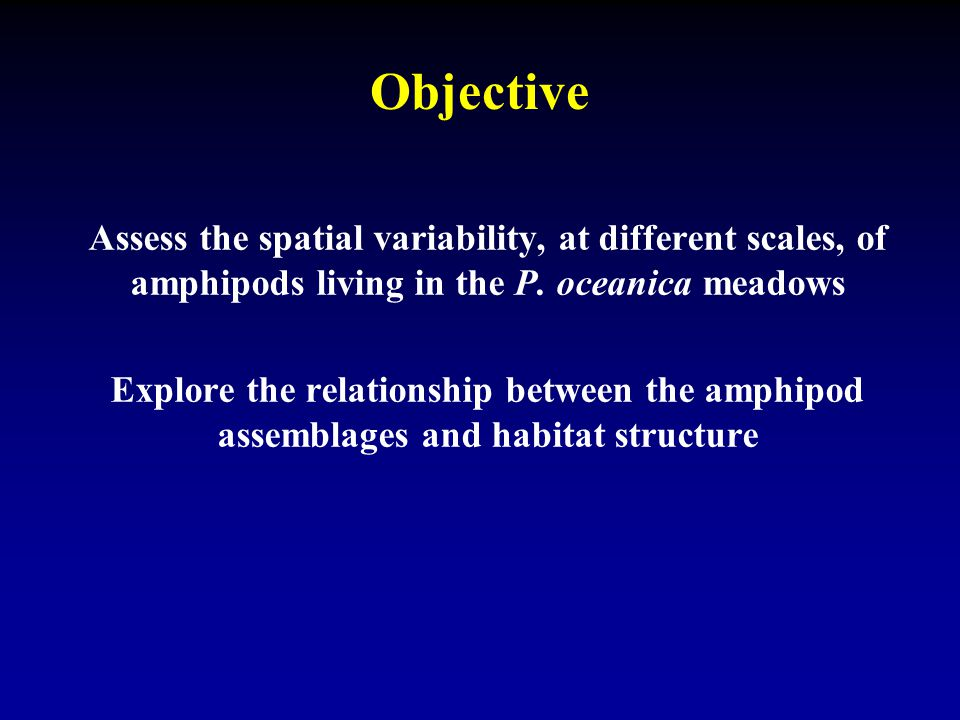 Objective Assess the spatial variability, at different scales, of amphipods living in the P. oceanica meadows Explore the relationship between the amp