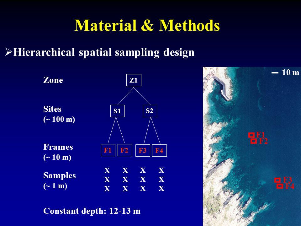  Hierarchical spatial sampling design Material & Methods S1 S2 F1F2 Sites (~ 100 m) Frames (~ 10 m) Samples (~ 1 m) XXXXXX XXXXXX XXXXXX XXXXXX Z1 Zone Constant depth: 12-13 m 10 m F1 F2 F3 F4 F3F4