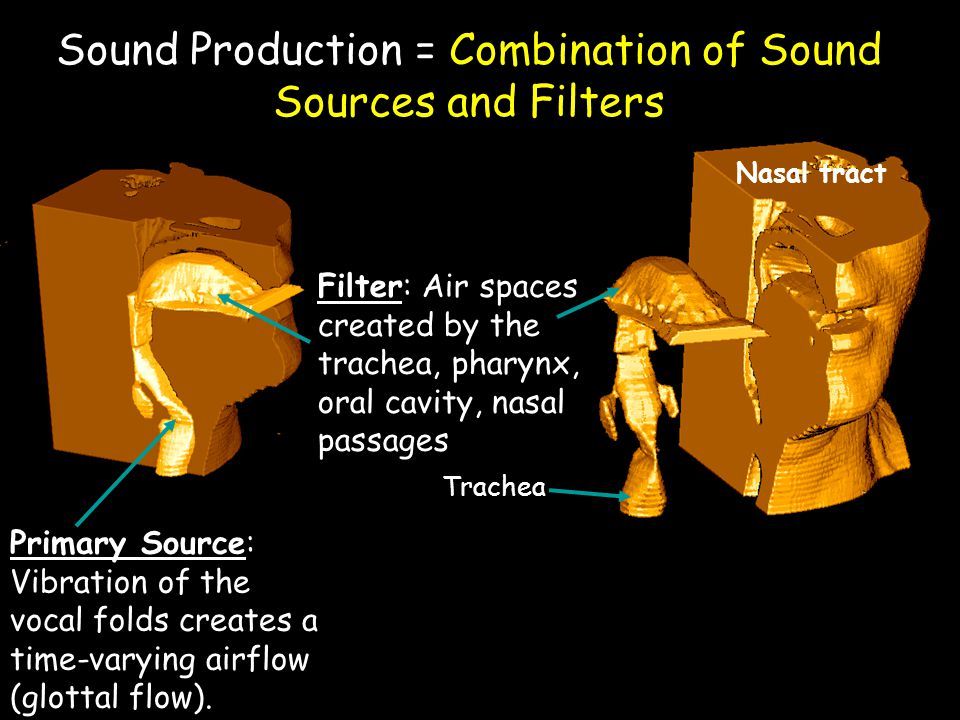 Physical model of human sound production: A mathematical representation of the physical processes that produce the sounds of speech and song.