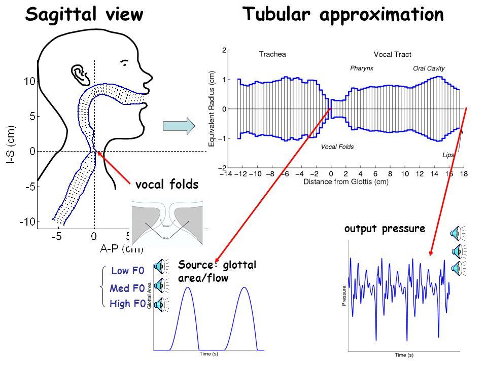 Source Model: vocal fold vibration, glottal area, glottal flow, etc.