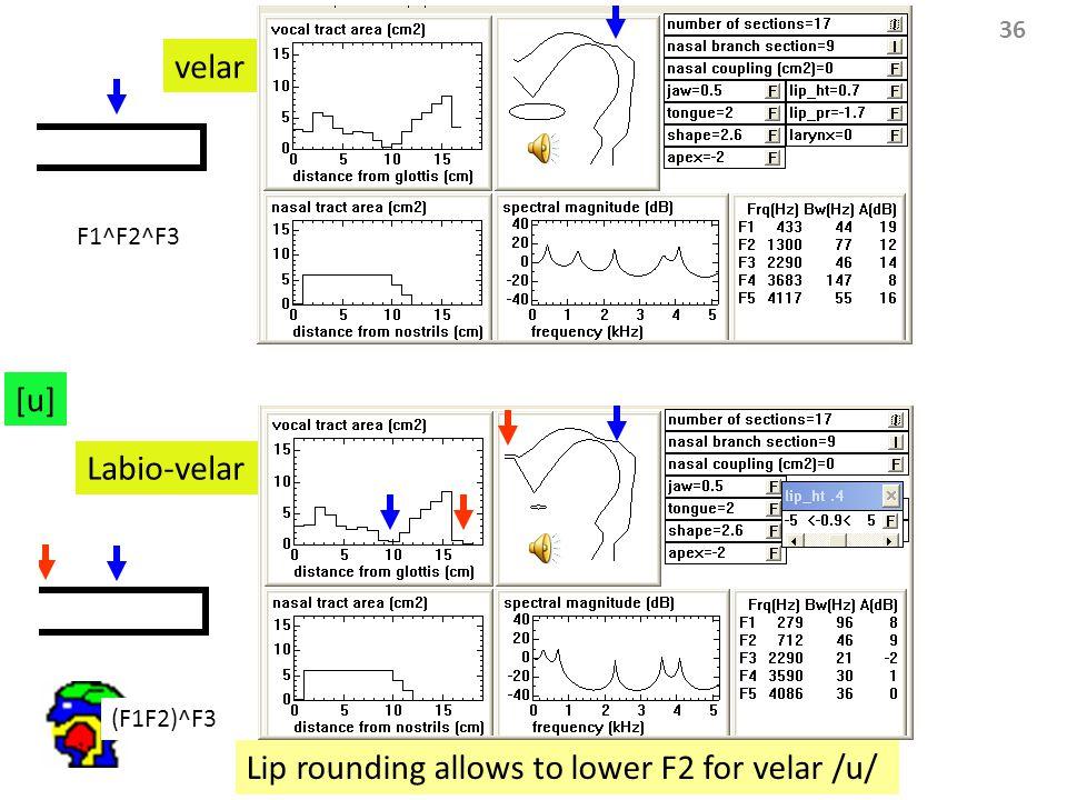 36 [u] Labio-velar velar Lip rounding allows to lower F2 for velar /u/ F1^F2^F3 (F1F2)^F3