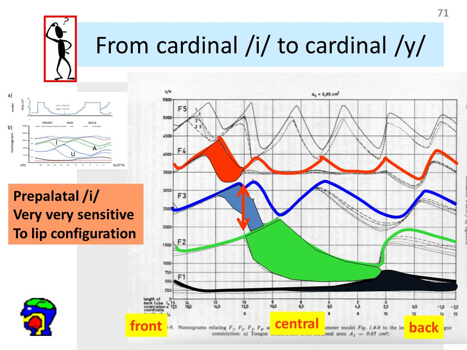 71 front central back Prepalatal /i/ Very very sensitive To lip configuration From cardinal /i/ to cardinal /y/