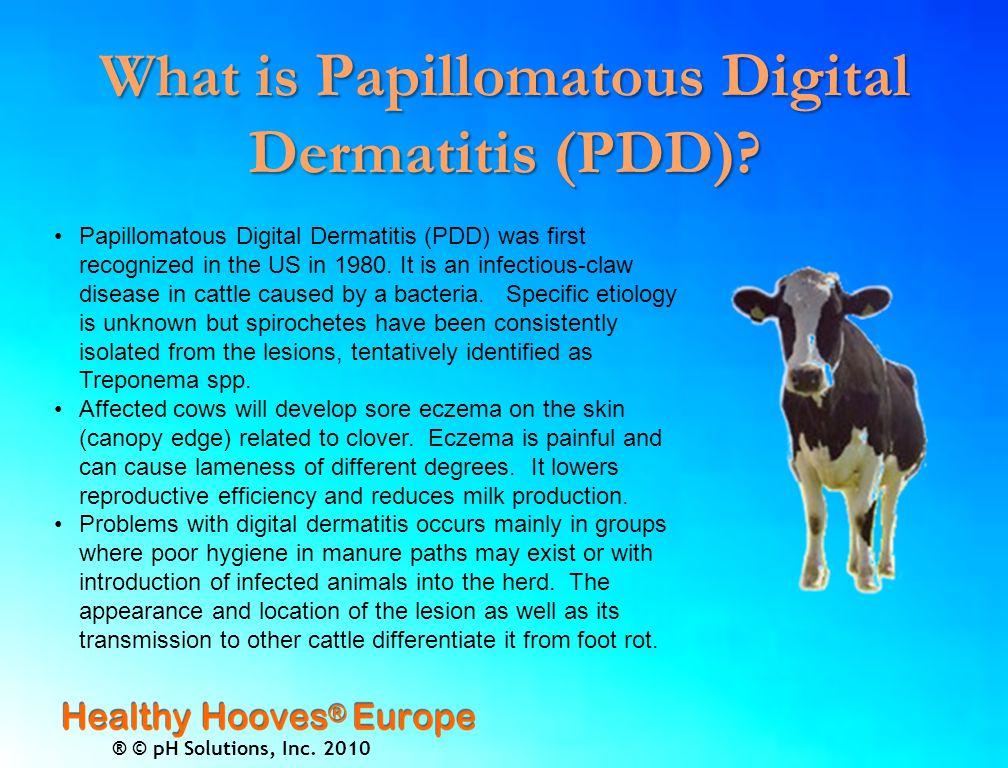 ® © pH Solutions, Inc.2010 What is Papillomatous Digital Dermatitis ( PDD).