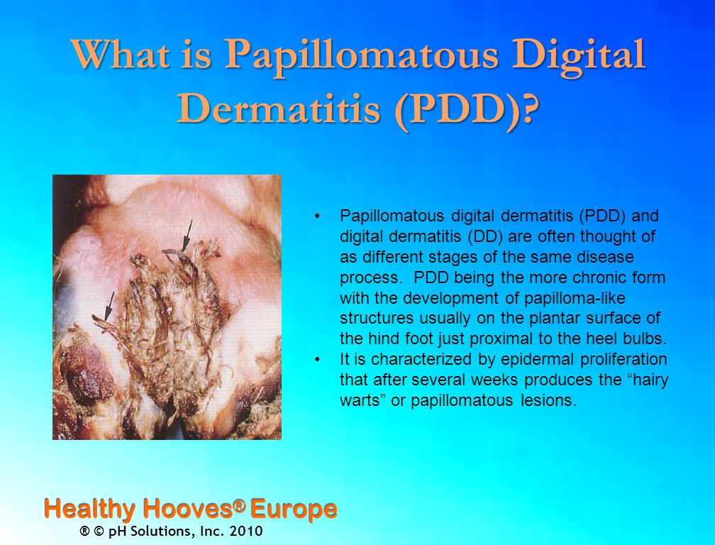 ® © pH Solutions, Inc. 2010 What is Papillomatous Digital Dermatitis ( PDD).