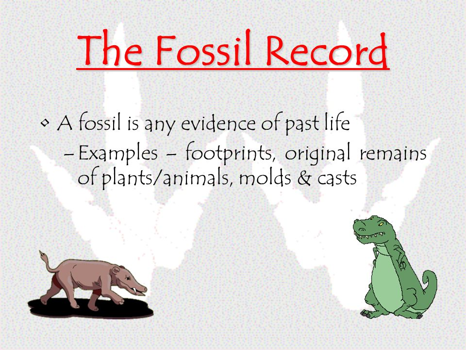 The Fossil Record A fossil is any evidence of past life –Examples – footprints, original remains of plants/animals, molds & casts