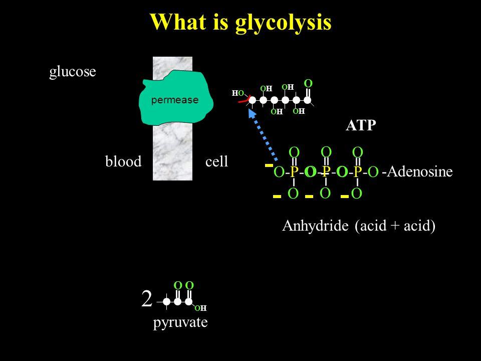 What is glycolysis bloodcell glucose O OHOH 2 pyruvate O permease O O O-P-OO-P-O -Adenosine O O O-P-OO-P-O O O O-P-OO-P-O ATP Anhydride (acid + acid) O OHOH HOHO OHOH OHOH OHOH