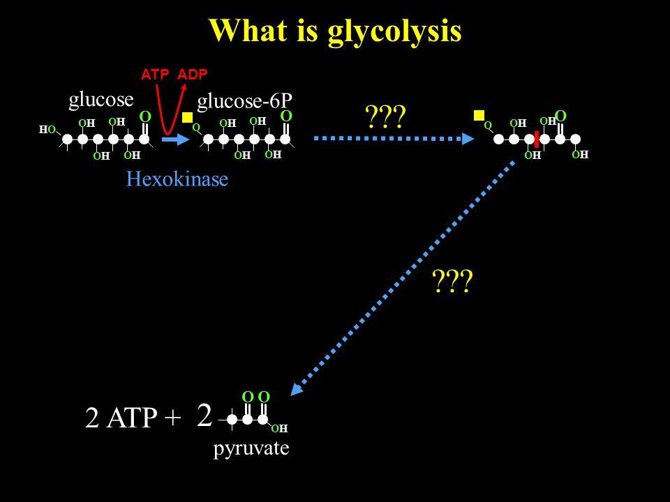 What is glycolysis O OHOH 2 pyruvate O glucose O OHOH HOHO OHOH OHOH OHOH 2 ATP + glucose-6P Hexokinase .