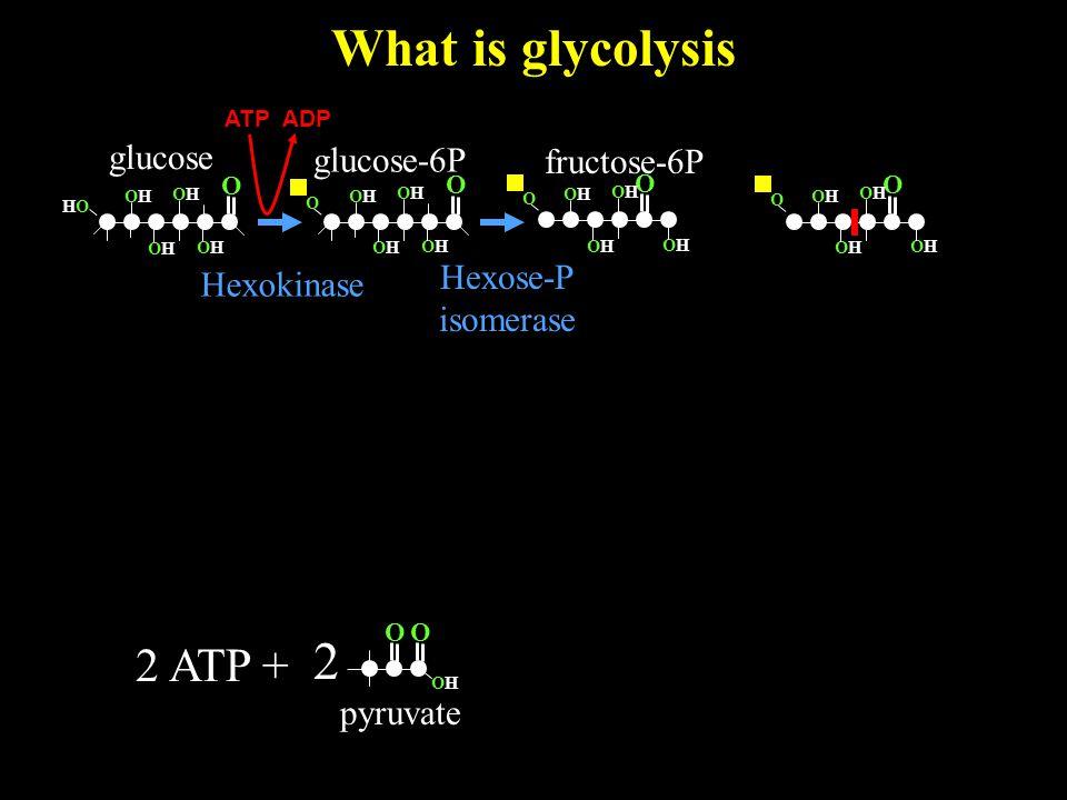 What is glycolysis O OHOH 2 pyruvate O glucose O OHOH HOHO OHOH OHOH OHOH 2 ATP + glucose-6P Hexokinase O OHOH OHOH OHOH OHOH O O OHOH OHOH OHOH OHOH O O OHOH OHOH OHOH OHOH O fructose-6P Hexose-P isomerase ATP ADP