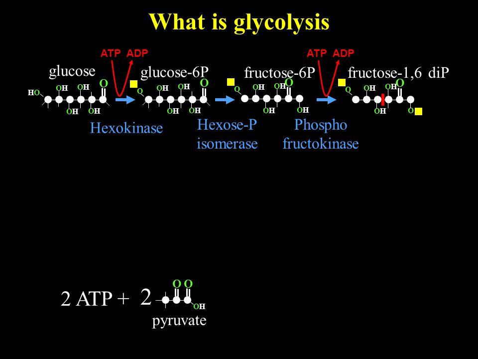 What is glycolysis O OHOH 2 pyruvate O glucose O OHOH HOHO OHOH OHOH OHOH 2 ATP + glucose-6P Hexokinase O OHOH OHOH OHOH OHOH O O OHOH O OHOH OHOH O O OHOH OHOH OHOH OHOH O fructose-6P Hexose-P isomerase ATP ADP fructose-1,6 diP Phospho fructokinase