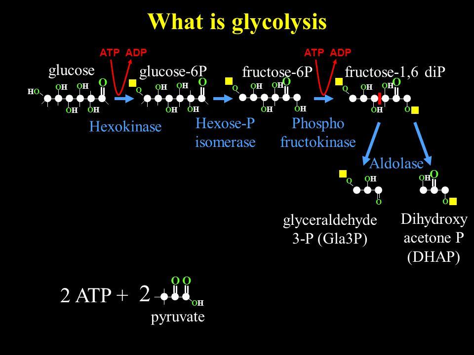 What is glycolysis O OHOH 2 pyruvate O glucose O OHOH HOHO OHOH OHOH OHOH 2 ATP + glucose-6P Hexokinase O OHOH OHOH OHOH OHOH O O OHOH O OHOH OHOH O O OHOH OHOH OHOH OHOH O fructose-6P Hexose-P isomerase ATP ADP fructose-1,6 diP Phospho fructokinase O O O OHOH OHOH O Dihydroxy acetone P (DHAP) glyceraldehyde 3-P (Gla3P) Aldolase