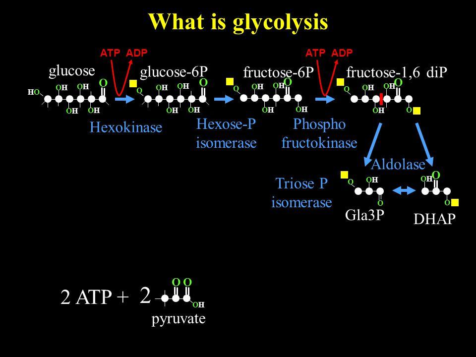 What is glycolysis O OHOH 2 pyruvate O glucose O OHOH HOHO OHOH OHOH OHOH 2 ATP + glucose-6P Hexokinase O OHOH OHOH OHOH OHOH O O OHOH O OHOH OHOH O O OHOH OHOH OHOH OHOH O fructose-6P Hexose-P isomerase ATP ADP fructose-1,6 diP Phospho fructokinase O O O OHOH OHOH O DHAP Gla3P Aldolase Triose P isomerase