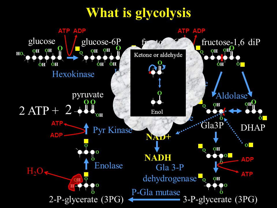 What is glycolysis O OHOH 2 pyruvate O glucose O OHOH HOHO OHOH OHOH OHOH 2 ATP + glucose-6P Hexokinase O OHOH OHOH OHOH OHOH O O OHOH O OHOH OHOH O O OHOH OHOH OHOH OHOH O fructose-6P Hexose-P isomerase ATP ADP fructose-1,6 diP Phospho fructokinase O O O OHOH OHOH O DHAP Gla3P Aldolase Triose P isomerase O OHOH O O O NAD+ NADH O OHOH O O ADP ATP Gla 3-P dehydrogenase 3-P-glycerate (3PG) O O OHOH O H 2-P-glycerate (3PG) O O O Ketone or aldehyde O O Enol H2OH2O P-Gla mutase Enolase Pyr Kinase ATP ADP