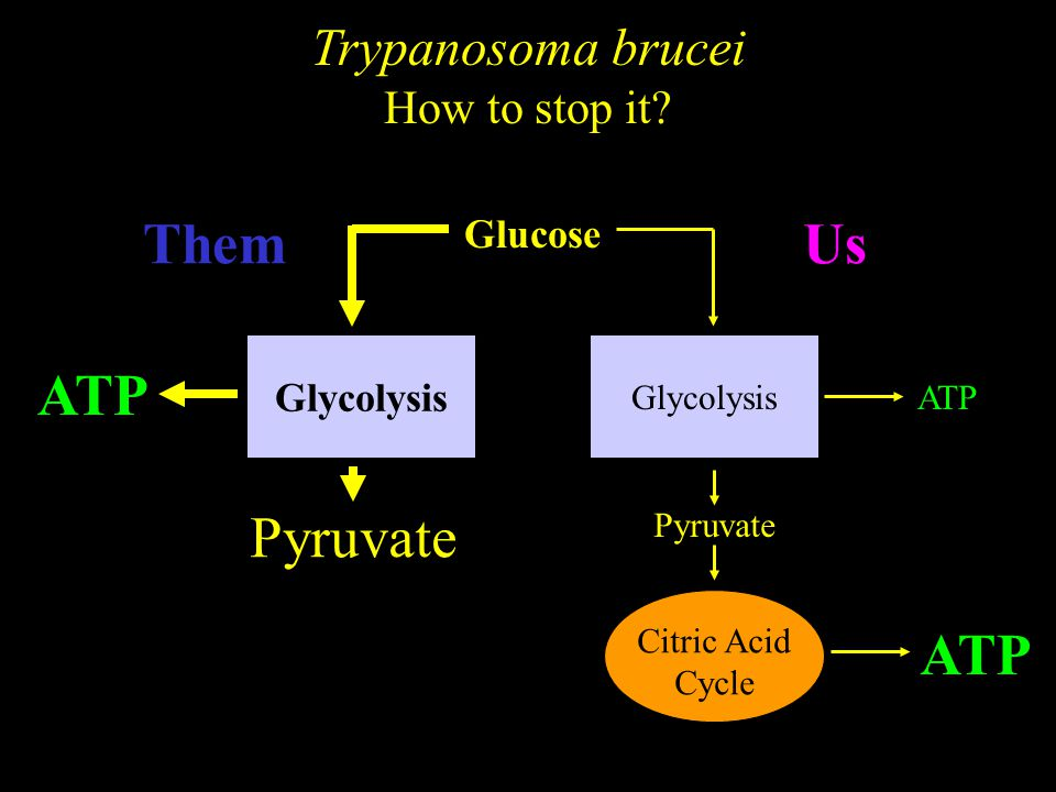 Characteristics of enzymes Chemical reactions Δt S0S0