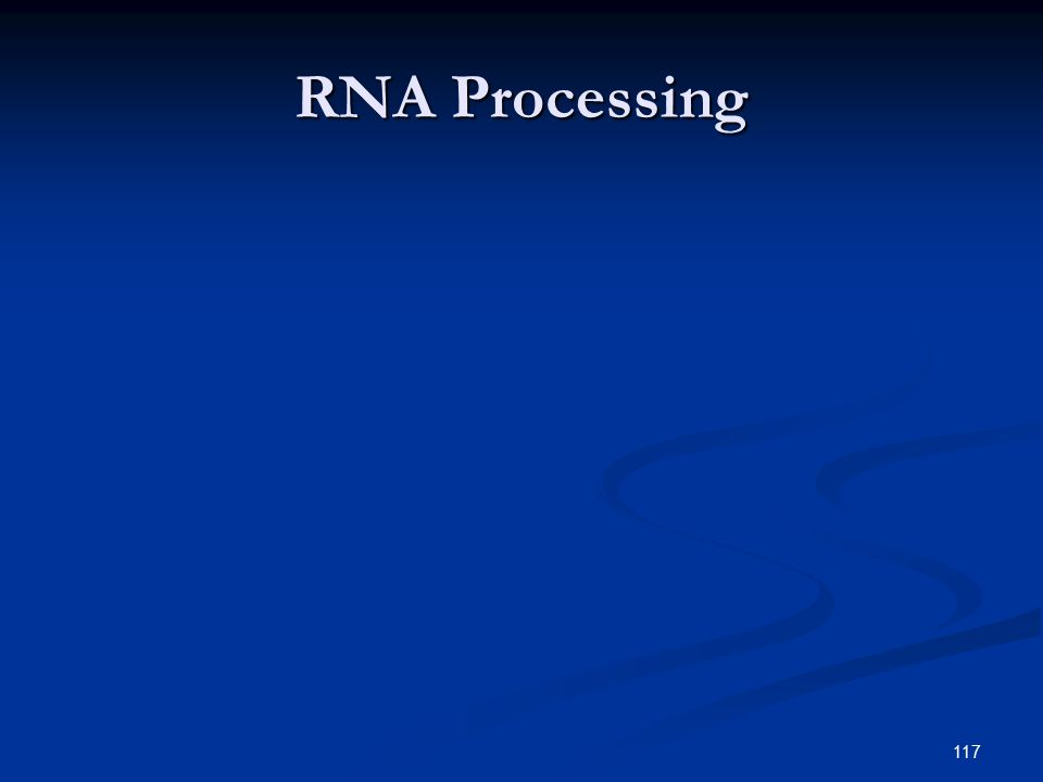 117 RNA Processing