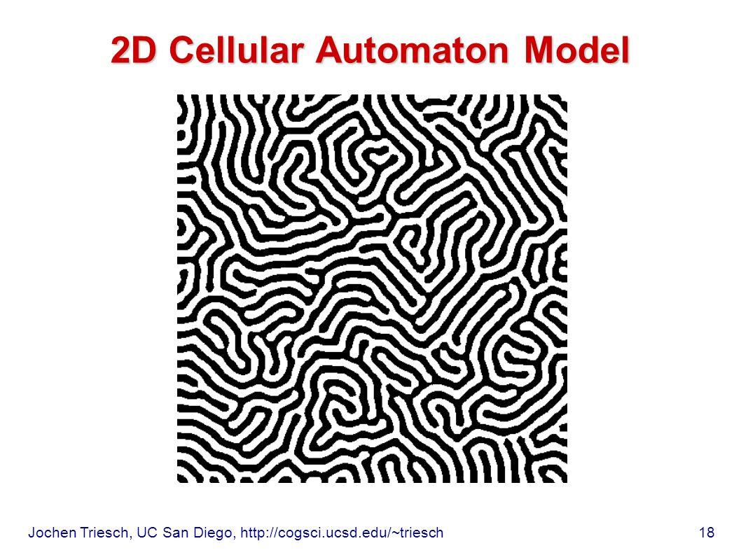 Jochen Triesch, UC San Diego, http://cogsci.ucsd.edu/~triesch 18 2D Cellular Automaton Model