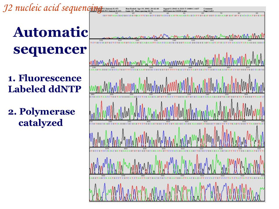 Automatic sequencer 1.Fluorescence Labeled ddNTP 2. Polymerase catalyzed J2 nucleic acid sequencing