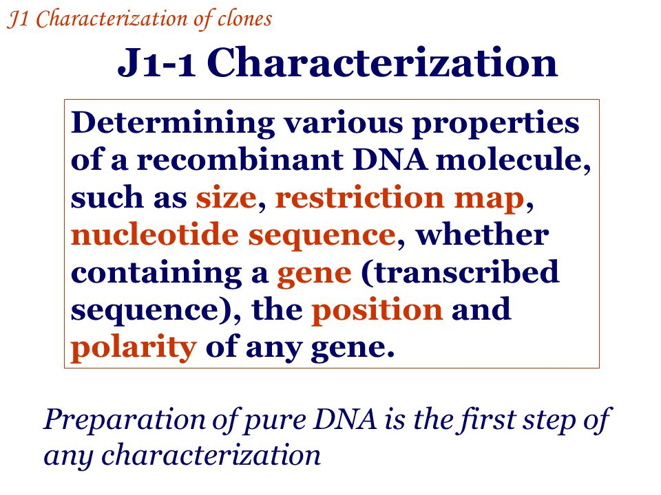J1-1 Characterization Determining various properties of a recombinant DNA molecule, such as size, restriction map, nucleotide sequence, whether contai