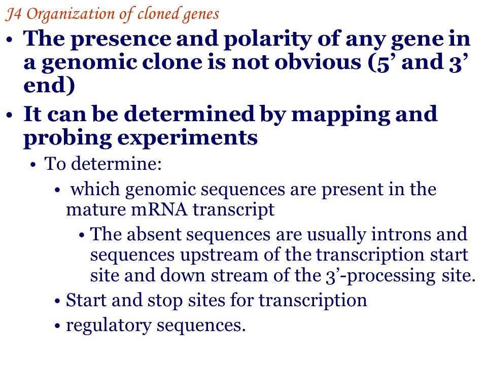 The presence and polarity of any gene in a genomic clone is not obvious (5' and 3' end) It can be determined by mapping and probing experiments To det