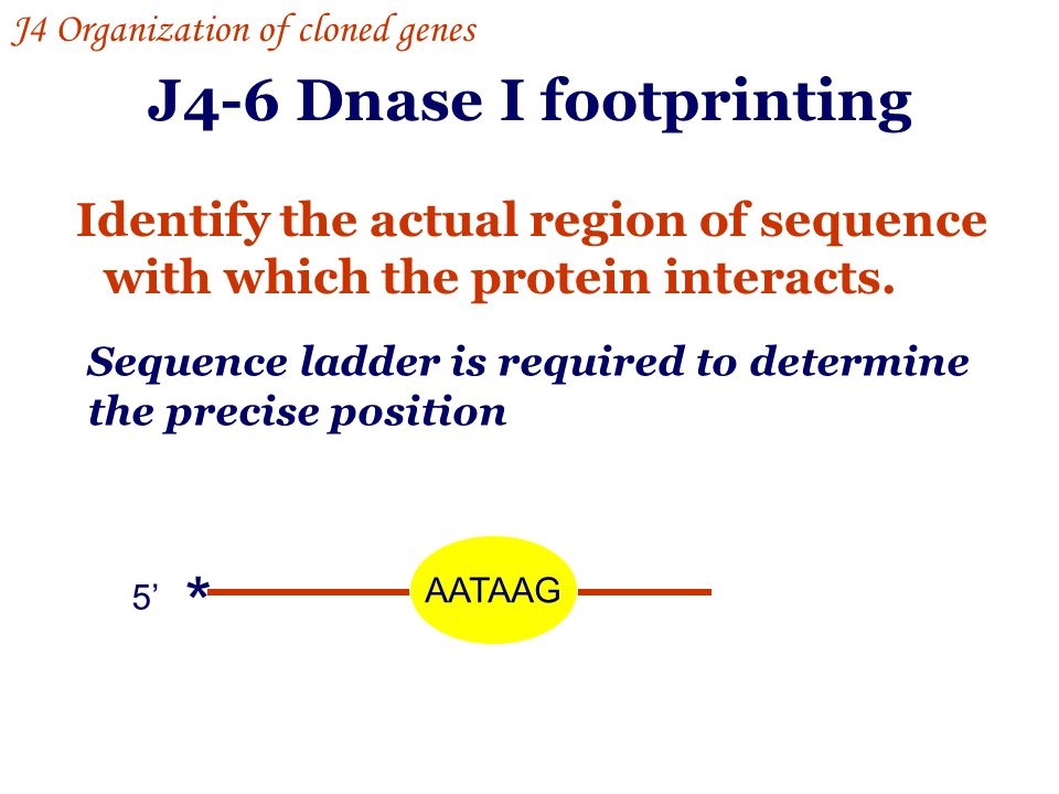 J4-6 Dnase I footprinting Identify the actual region of sequence with which the protein interacts. AATAAG 5' * Sequence ladder is required to determin