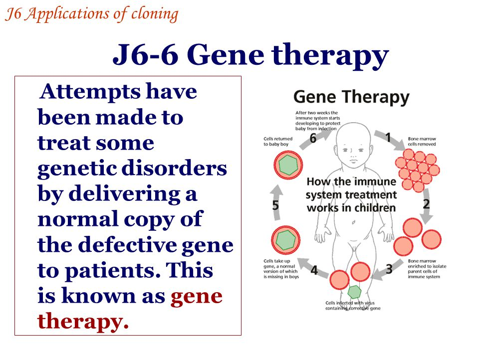 J6-6 Gene therapy Attempts have been made to treat some genetic disorders by delivering a normal copy of the defective gene to patients. This is known