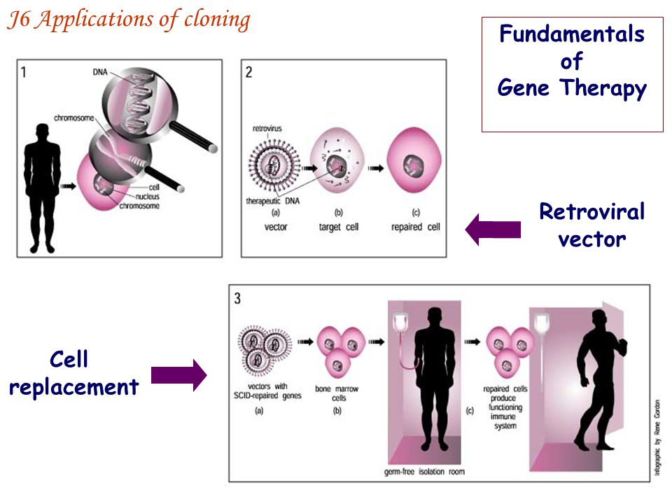 Fundamentals of Gene Therapy Cell replacement Retroviral vector J6 Applications of cloning