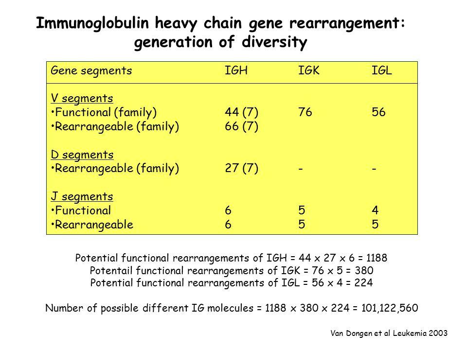 Gene segmentsIGHIGKIGL V segments Functional (family)44 (7)7656 Rearrangeable (family)66 (7) D segments Rearrangeable (family)27 (7)-- J segments Functional654 Rearrangeable655 Van Dongen et al Leukemia 2003 Immunoglobulin heavy chain gene rearrangement: generation of diversity Potential functional rearrangements of IGH = 44 x 27 x 6 = 1188 Potentail functional rearrangements of IGK = 76 x 5 = 380 Potential functional rearrangements of IGL = 56 x 4 = 224 Number of possible different IG molecules = 1188 x 380 x 224 = 101,122,560