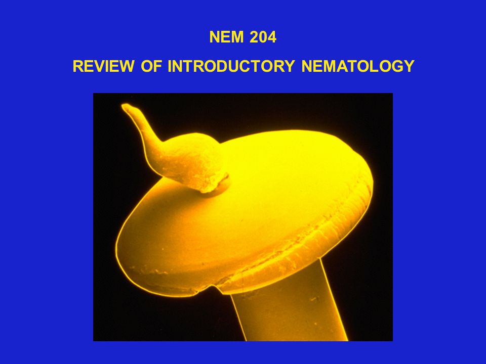 NEM 204 REVIEW OF INTRODUCTORY NEMATOLOGY
