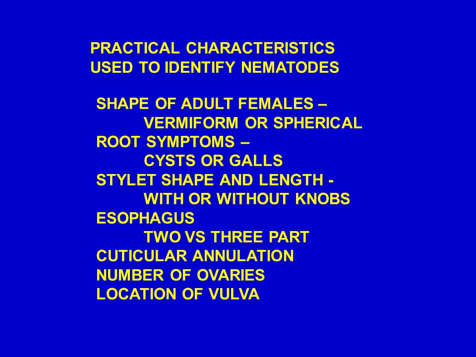 SHAPE OF ADULT FEMALES – VERMIFORM OR SPHERICAL ROOT SYMPTOMS – CYSTS OR GALLS STYLET SHAPE AND LENGTH - WITH OR WITHOUT KNOBS ESOPHAGUS TWO VS THREE PART CUTICULAR ANNULATION NUMBER OF OVARIES LOCATION OF VULVA PRACTICAL CHARACTERISTICS USED TO IDENTIFY NEMATODES