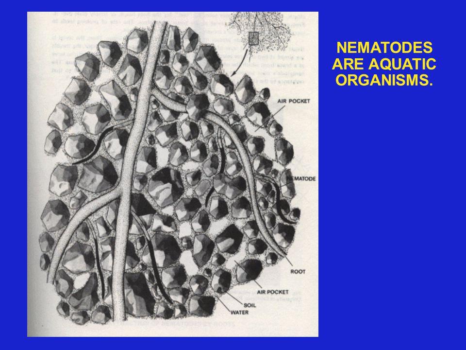 NEMATODES ARE AQUATIC ORGANISMS.