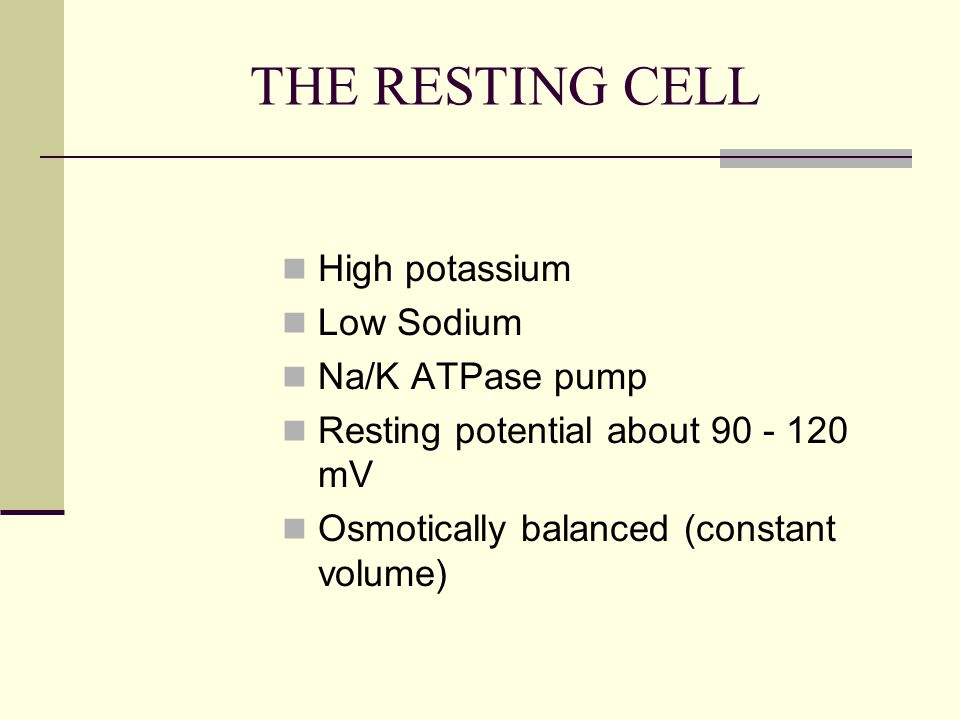 THE RESTING CELL High potassium Low Sodium Na/K ATPase pump Resting potential about 90 - 120 mV Osmotically balanced (constant volume)