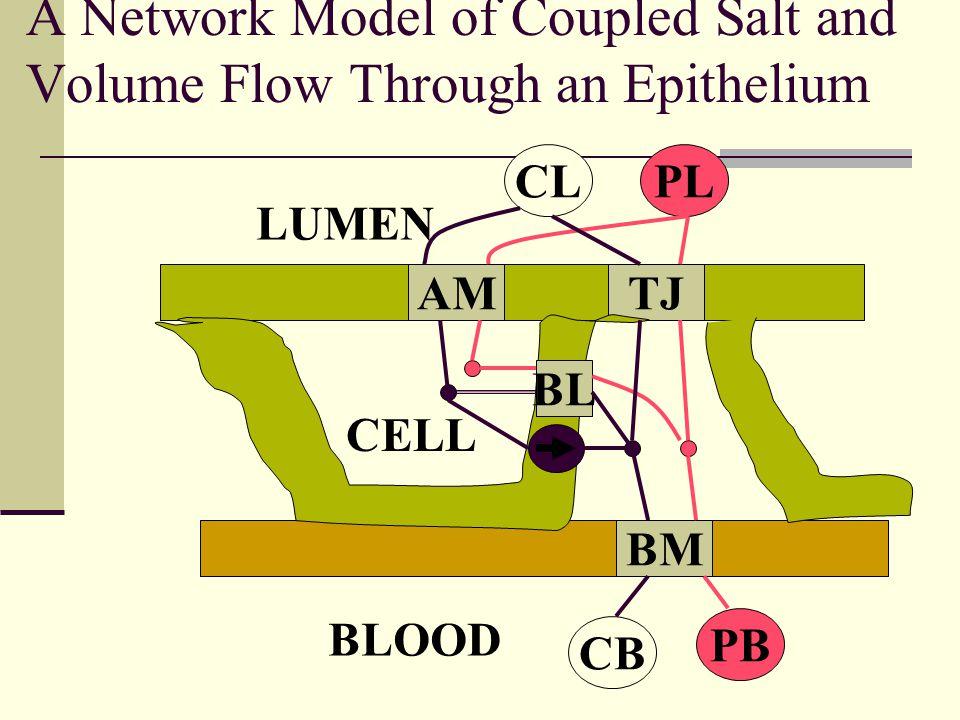 A Network Model of Coupled Salt and Volume Flow Through an Epithelium AMTJ BM BL CLPL CB PB CELL LUMEN BLOOD
