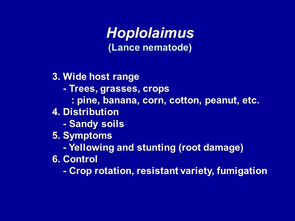 Hoplolaimus (Lance nematode) 3. Wide host range - Trees, grasses, crops : pine, banana, corn, cotton, peanut, etc. 4. Distribution - Sandy soils 5. Sy