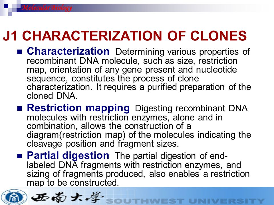 J1 CHARACTERIZATION OF CLONES Characterization Determining various properties of recombinant DNA molecule, such as size, restriction map, orientation