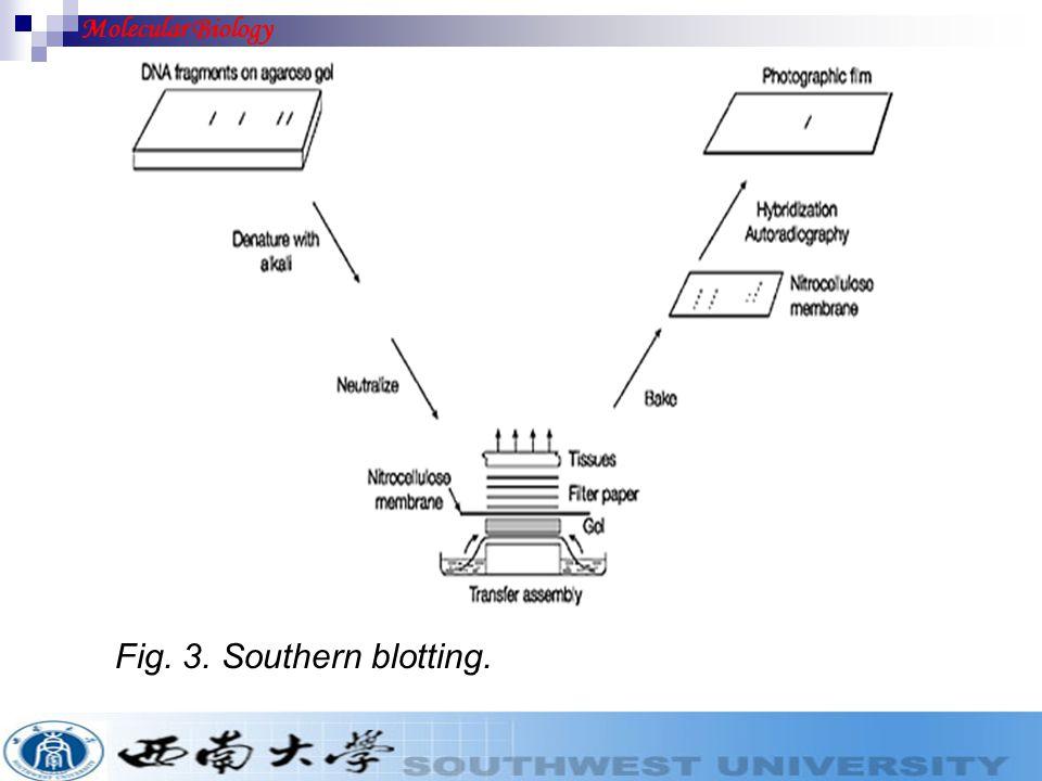 Fig. 3. Southern blotting. Molecular Biology
