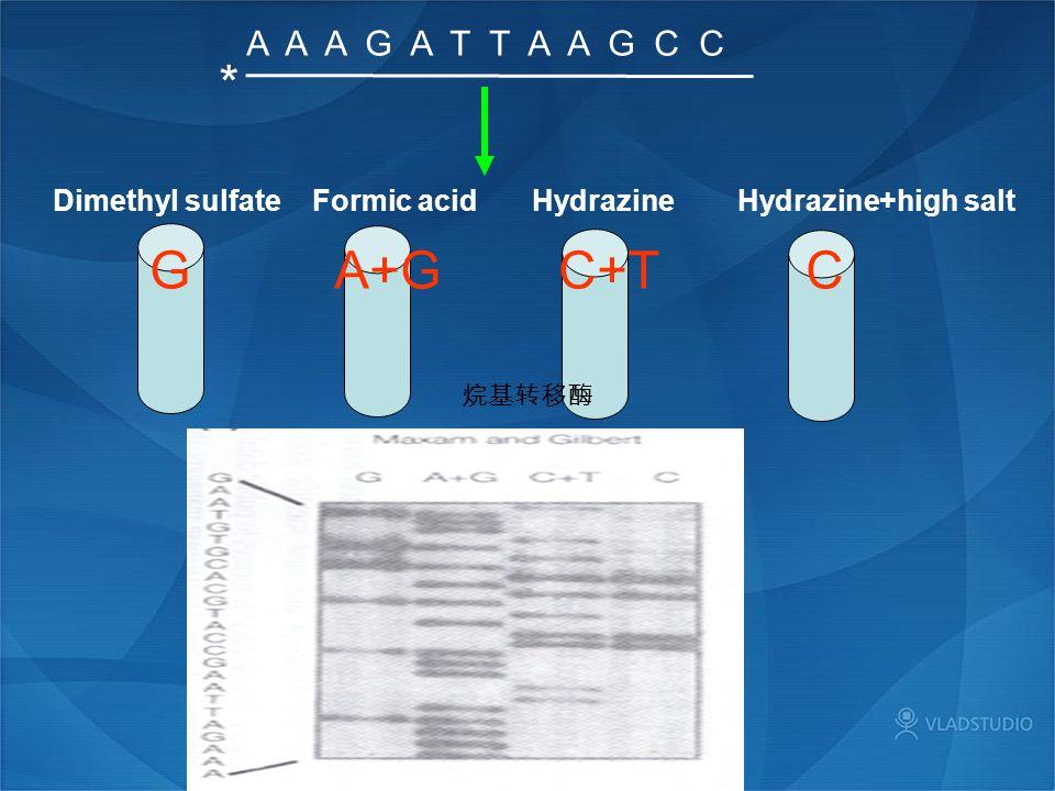A A A G A T T A A G C C * G A+G C+T C Dimethyl sulfate Formic acid Hydrazine Hydrazine+high salt 烷基转移酶