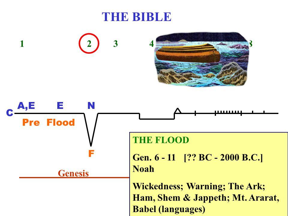 THE BIBLE 1 2 3 4 5 6 7 8 C A,EEN Pre Flood F Genesis THE FLOOD Gen. 6 - 11 [?? BC - 2000 B.C.] Noah Wickedness; Warning; The Ark; Ham, Shem & Jappeth