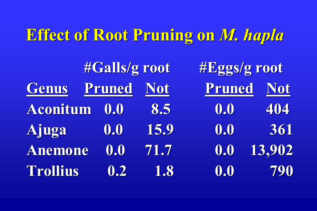 Effect of Root Pruning on M.