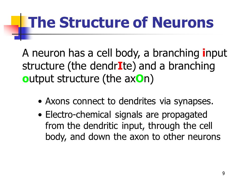 9 Axons connect to dendrites via synapses. Electro-chemical signals are propagated from the dendritic input, through the cell body, and down the axon