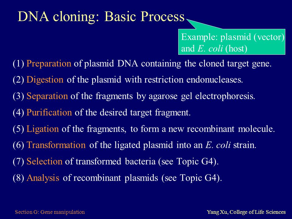 Section G: Gene manipulationYang Xu, College of Life Sciences DNA cloning: Basic Process (1) Preparation of plasmid DNA containing the cloned target g