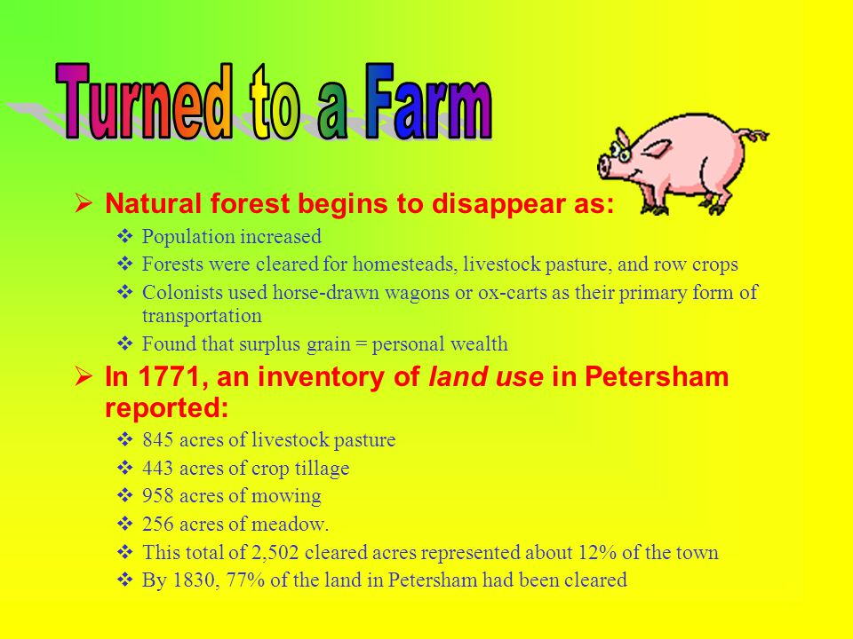  Natural forest begins to disappear as:  Population increased  Forests were cleared for homesteads, livestock pasture, and row crops  Colonists used horse-drawn wagons or ox-carts as their primary form of transportation  Found that surplus grain = personal wealth  In 1771, an inventory of land use in Petersham reported:  845 acres of livestock pasture  443 acres of crop tillage  958 acres of mowing  256 acres of meadow.