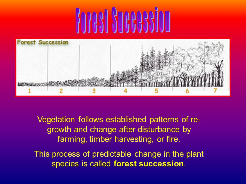 Vegetation follows established patterns of re- growth and change after disturbance by farming, timber harvesting, or fire.