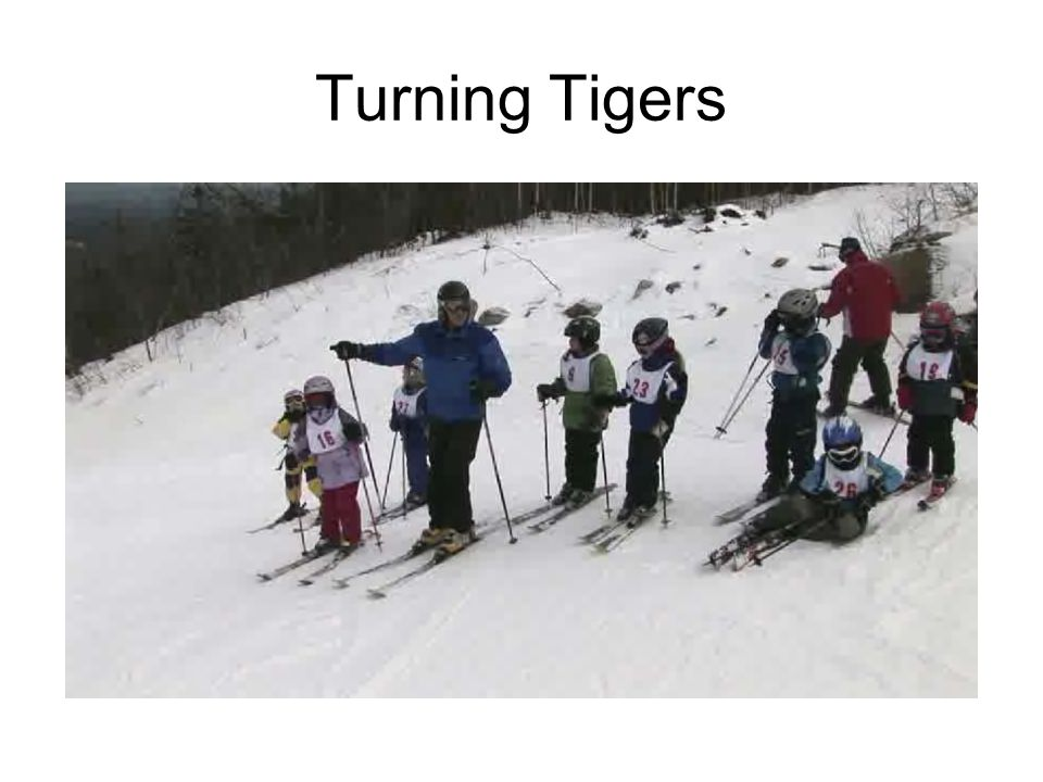 Turning Tigers