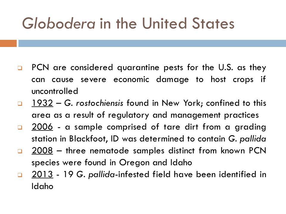 Globodera spp.