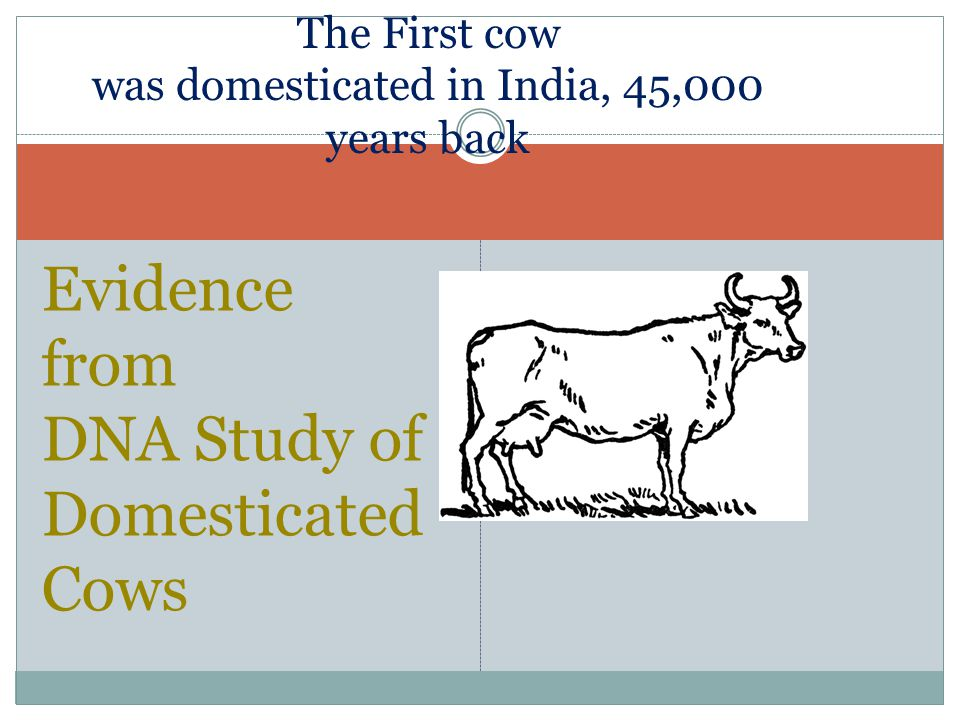 Study of cattle and domesticated animals