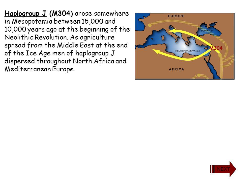 yDNA Haplogroup J