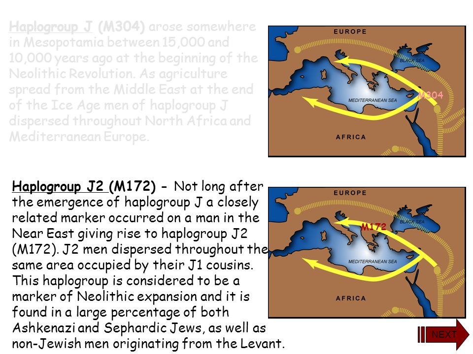 Haplogroup J (M304) arose somewhere in Mesopotamia between 15,000 and 10,000 years ago at the beginning of the Neolithic Revolution. As agriculture sp