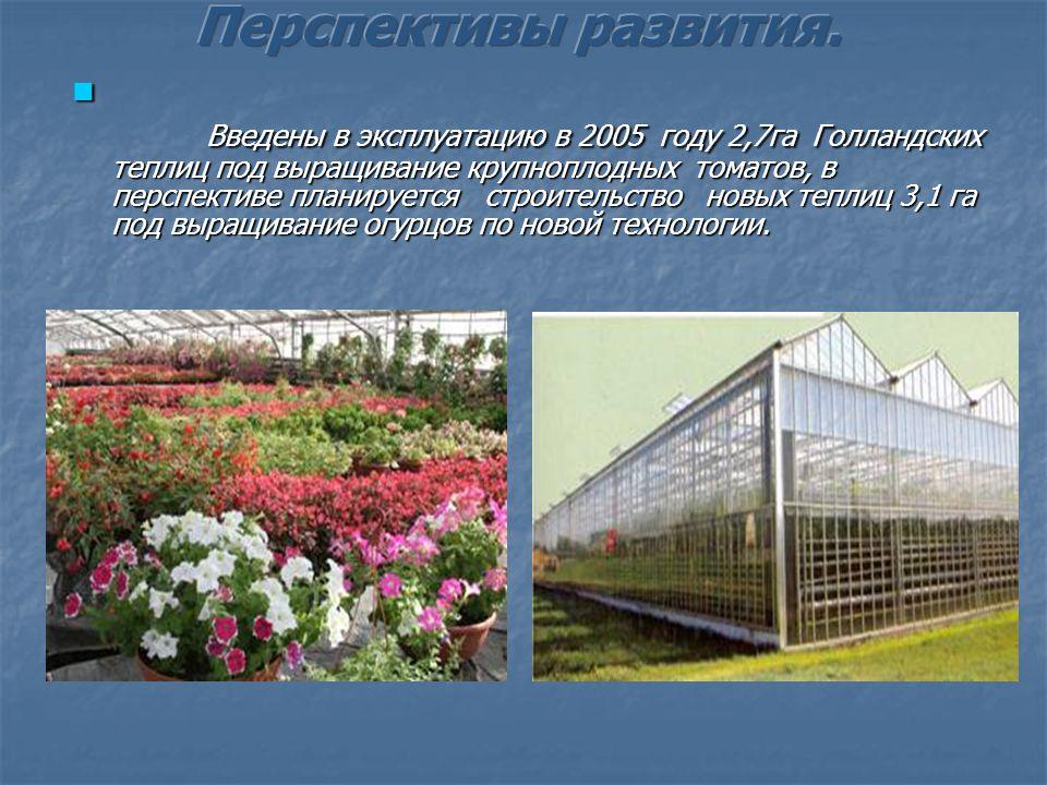 Тепличный комплекс ЗАО Матвеевское производит 3650 тонн экологически чистой овощной продукции в год (огурцы, помидоры, перец, баклажаны, зелень) -22 вида.