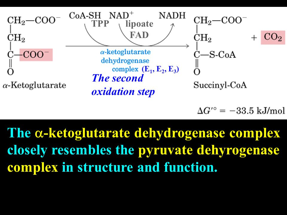 TPP lipoate FAD (E 1, E 2, E 3 ) The  -ketoglutarate dehydrogenase complex closely resembles the pyruvate dehyrogenase complex in structure and function.